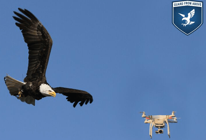 World Premiere: Dutch National Police Uses Birds of Prey to Intercept Hostile Drones